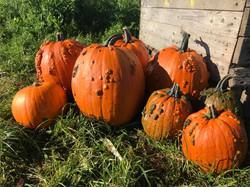 Alright-Pumpkin-Meath-patch