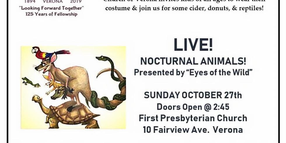 Nocturnal Animals and Halloween Fun
