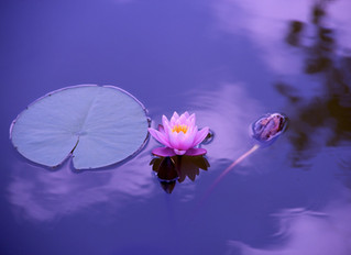 EFT And The Lotus Flower