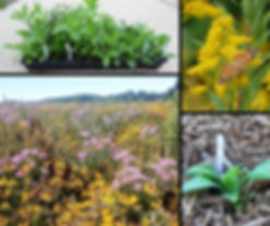 prairie collage.jpg