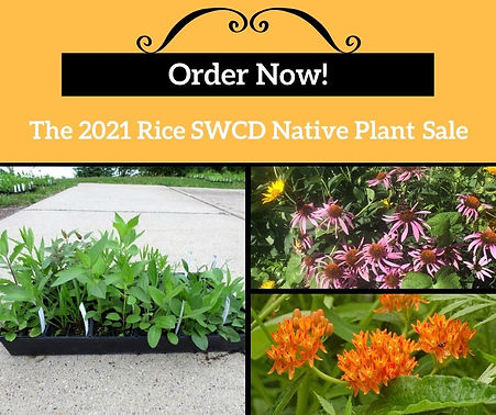 Order Now 2021 native plant sale.jpg