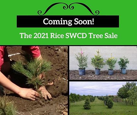 Coming Soon 2021 tree sale.jpg