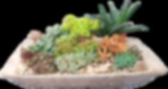 Dish Garden-Kate Boris.png