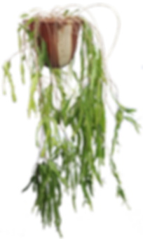 epiphytic - Parrs.png