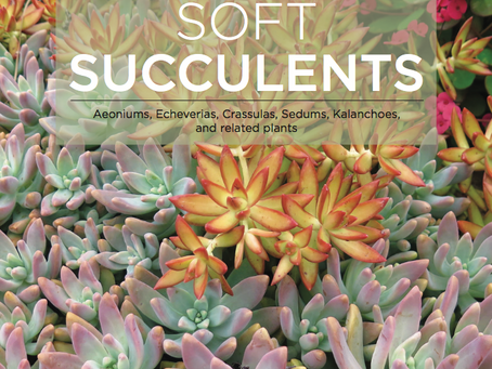 January Speaker: Soft Succulents