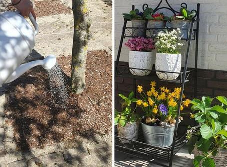 Vergeet niet uw bomen en planten te bewateren!
