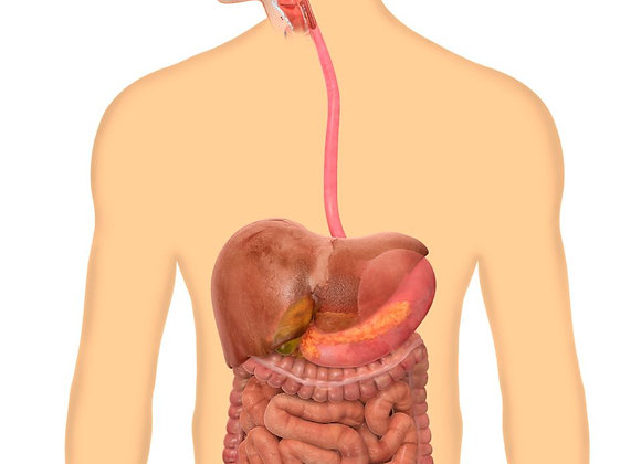 Module 10 : système digestif
