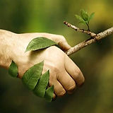 Naturopathe à Nimes et Sommieres Gard
