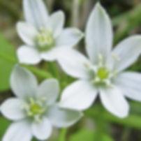 Naturopathe, conseils en fleurs de Bach et élixirs floraux entre Sommières 30250 et Quissac 30260 dans le Gard