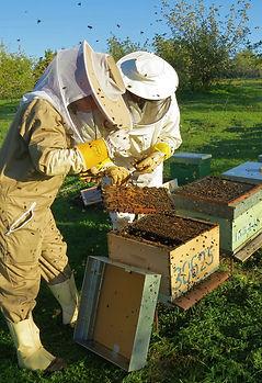 hives portugal.jpg