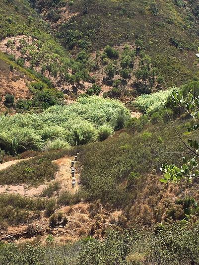 hives hills algarve.JPG
