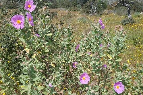Miel de Caroubier et Fleurs 500g