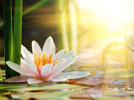 Tu propósito es el hilo que te conecta con la vida.