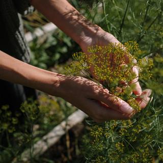 ליקוט צמחים-לסדנת בישול בטבע
