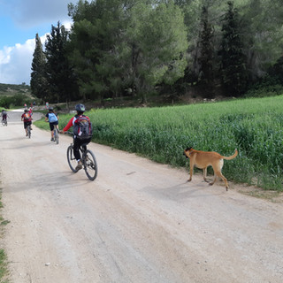 טיול אופניים מאורגן בחבל עדולם