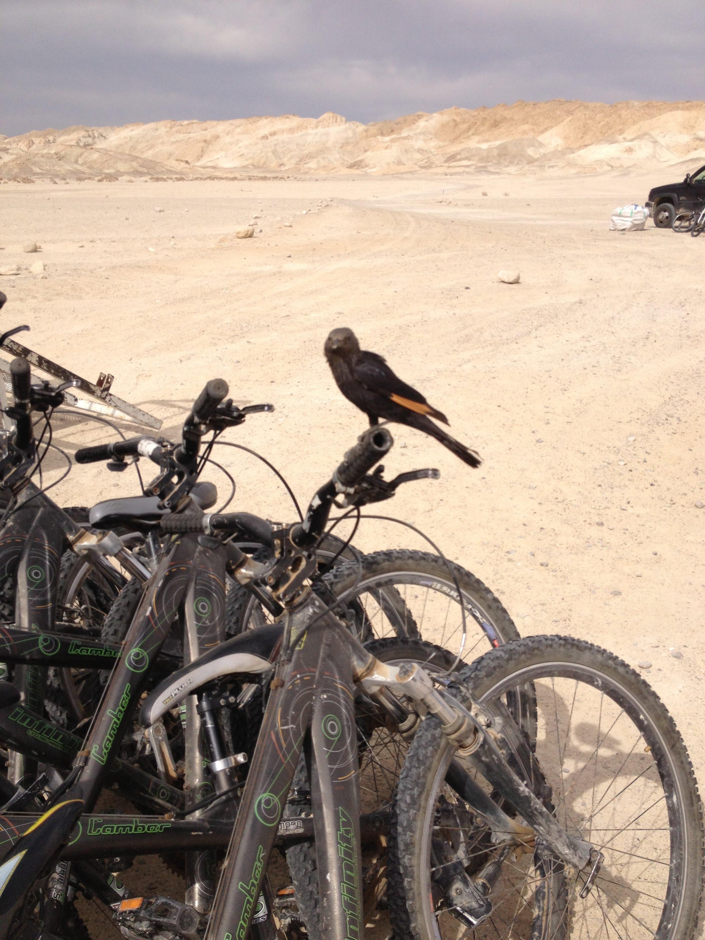 טיול אופניים מאורגן במדבר