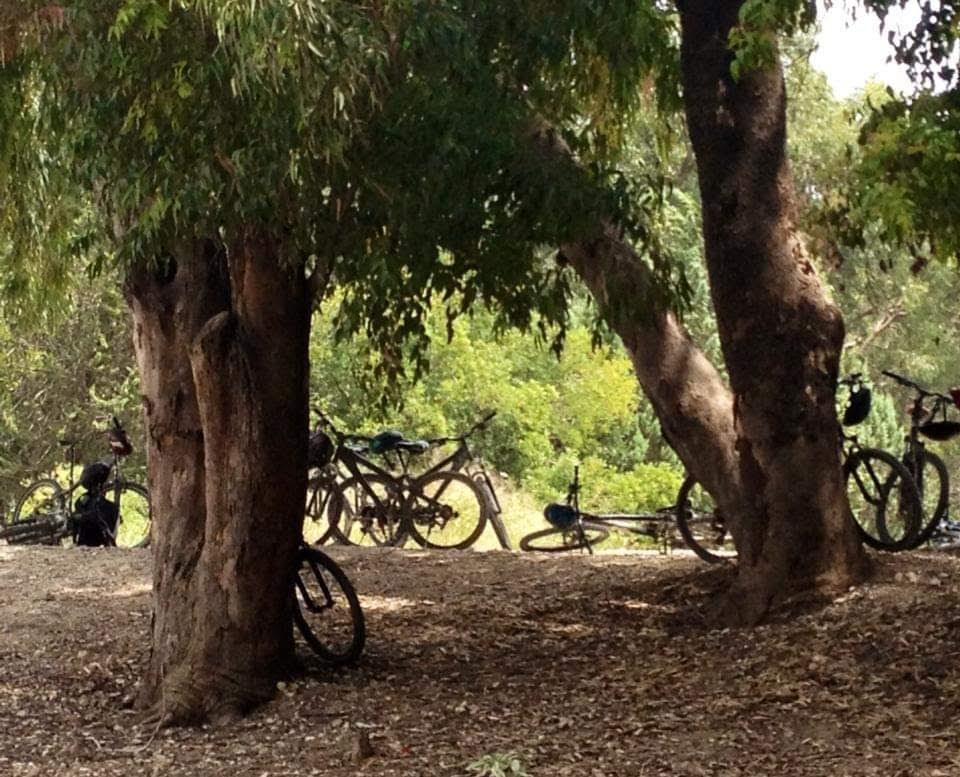 טיול אופניים מאורגן יער בן שמן
