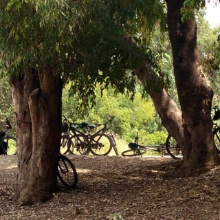 טיול אופניים באשדוד פארק לכיש