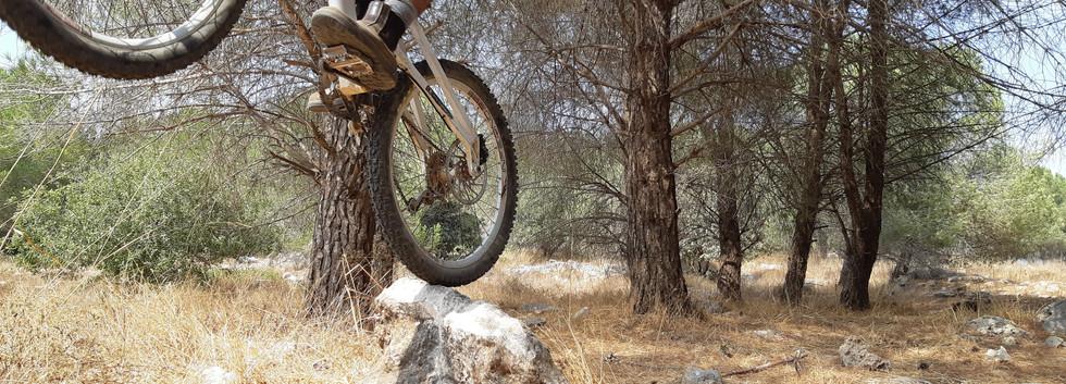 ליווי לרוכבי אופניים