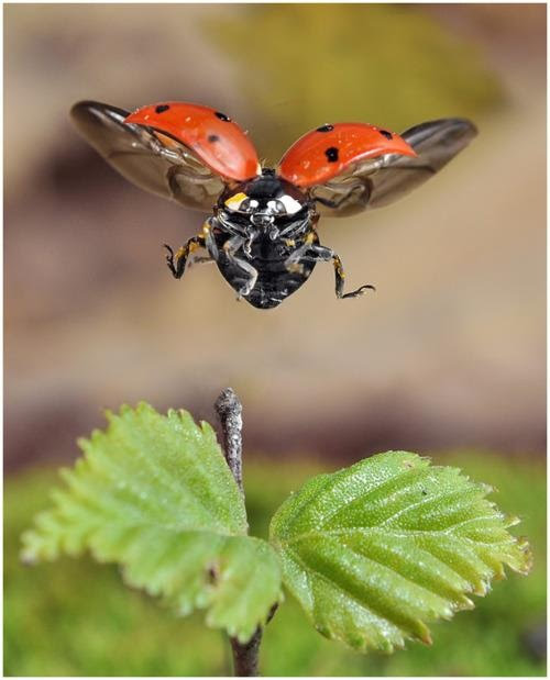 ללמוד לצלם בטבע