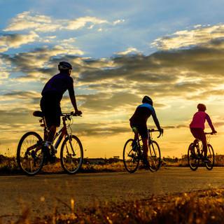 טיולי אופניים מאורגנים