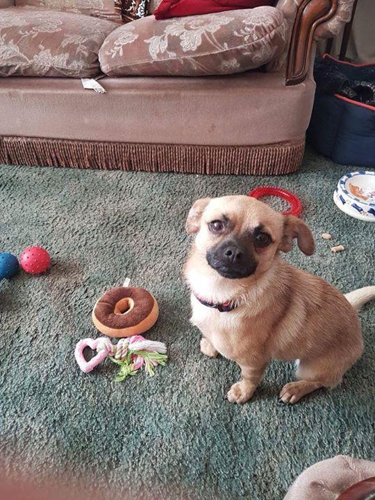 Adopted - Nina