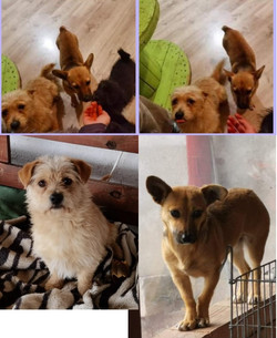 Tinkerbell and Idefix - Reserved