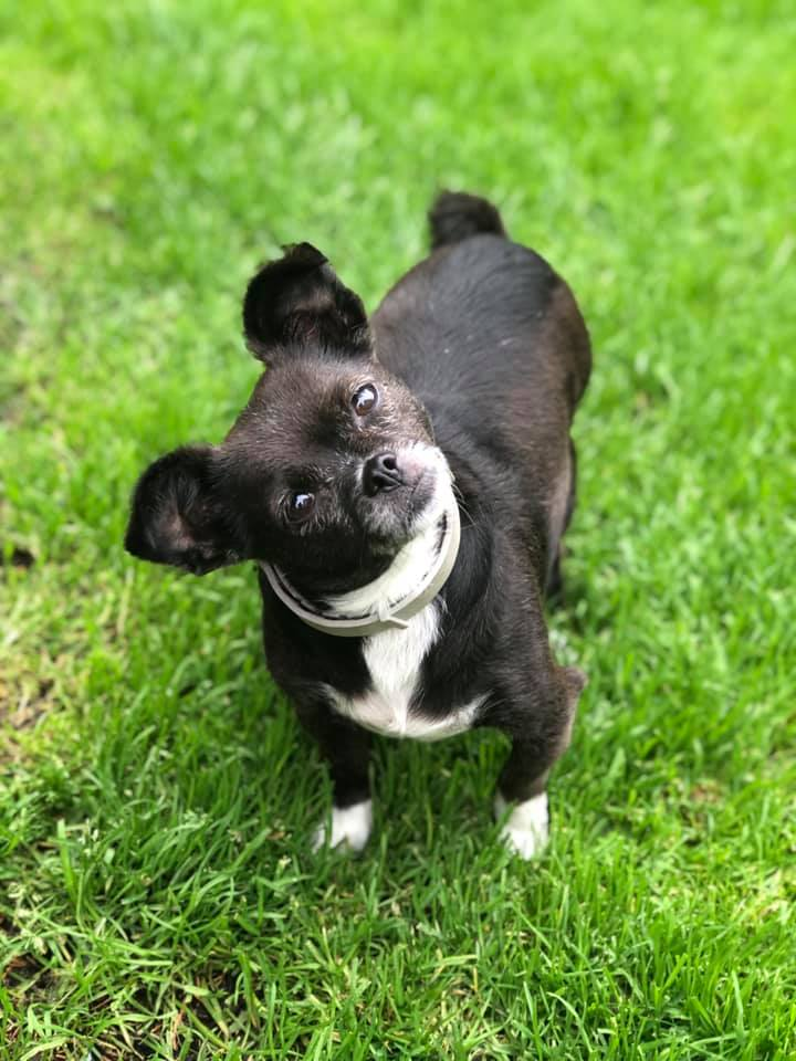 Evie - Reserved