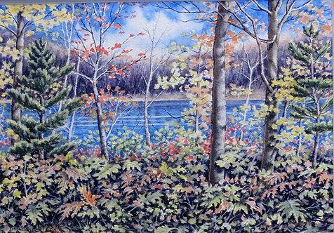 Autumn Muskoka Swamp - Margaret Jamieson