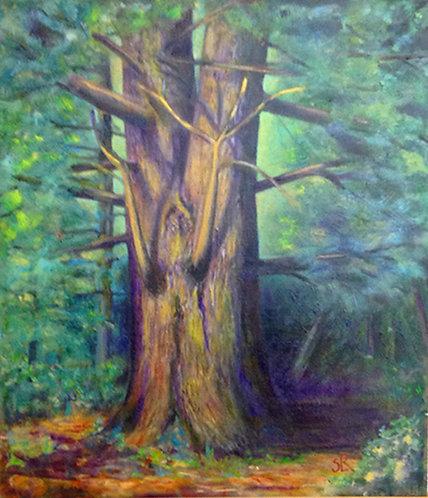 Old White Pine - Sylvia Le Roy