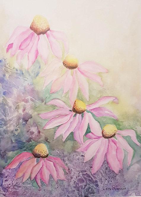 Summer Coneflowers -      Ann McClymont
