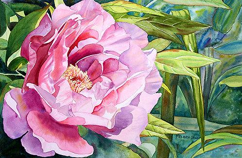 Nature's Gift - Melinda Calway
