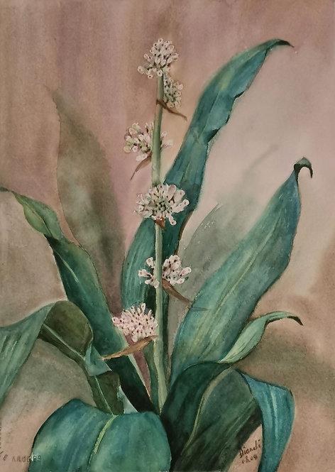Blooming Iron Plant - Diana Li