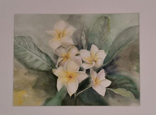 White Beauty - Diana Li