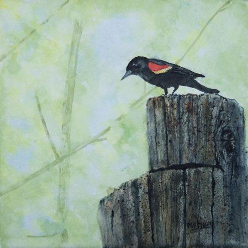Red-Winged Blackbird - Machiel Scholte