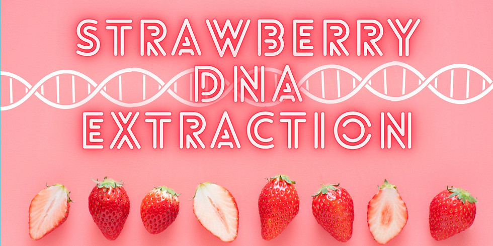 STEM: Strawberry DNA Extraction GRADES 6-12
