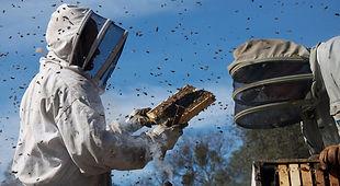 Stadtimkern Imkern Bienen