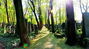 jüdischer Friedhof Weißensee Stadtnatur