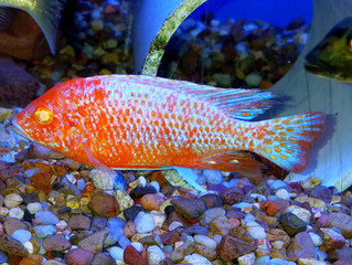New Arrivals Blue Hook Aquatics 04/20/19