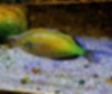 Emerald rainbow 4.jpg