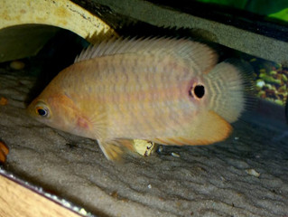 Newest Fish Arrivals 5/18/16