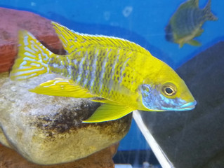 Newest Fish Arrivals 6/15/16