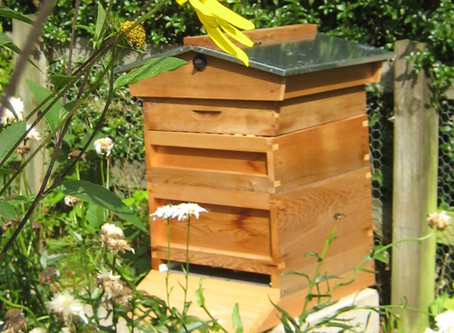 The Bees' Needs - (part 1)