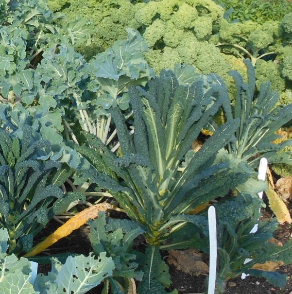 Group 2 - Brassicas