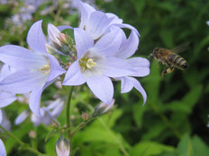 Get buzzy! It's World Bee Day!