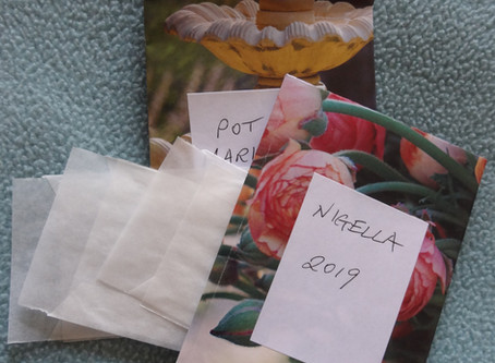 Sowing the Seeds (of love? No, plants - nearly the same thing!)