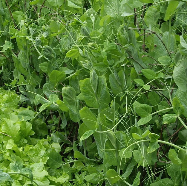 Group 1 - Legumes