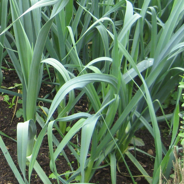 Group 3 - Onions and others
