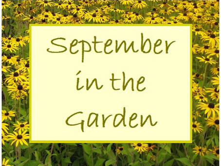 This Month in the Garden - incorporating Wine of the Month - September 2020