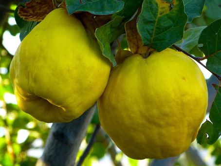 They dined on Mince and Slices of Quince...